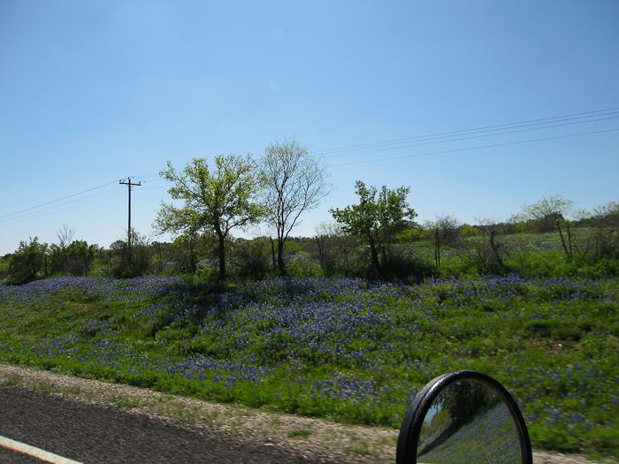 Wildseed Farms - Fredericksburg, TX